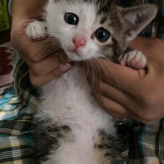 猫 男の子 生後2ヶ月位??
