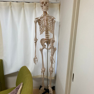 人体模型(骨格) 約190cm