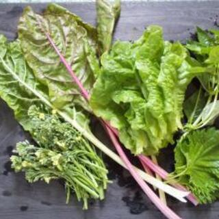 午前中出きる方☺️超短時間‼️夏野菜の手入れの画像