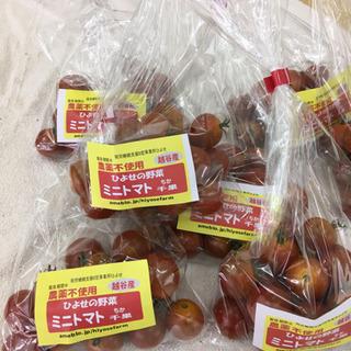 ミニトマト、奥武蔵きゅうり