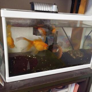 水槽【ろ過器、金魚も一緒に】