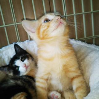 生後4ヶ月♡三毛猫♀ - 猫