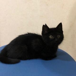 子猫生後3.5ヵ月 4匹 - 猫