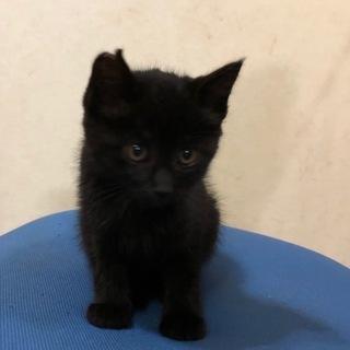 子猫生後3.5ヵ月 4匹 − 岡山県