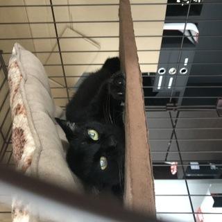 大人保護猫が行き場を失っています - 佐倉市