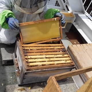 笠寺ミツバチプロジェクト 都市養蜂勉強会を開催します。