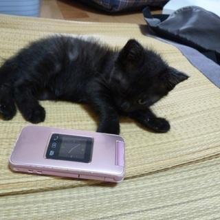 生後2か月くらいの黒猫(メス)です。里親募集