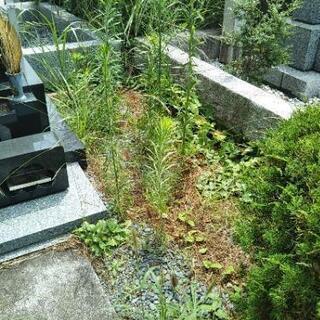 お墓参り代行、草むしりで綺麗にしたい!