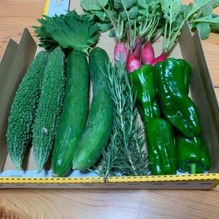 朝採り 無農薬野菜 きゅうり 大葉、ローズマリー、ゴーヤ 二十日大根