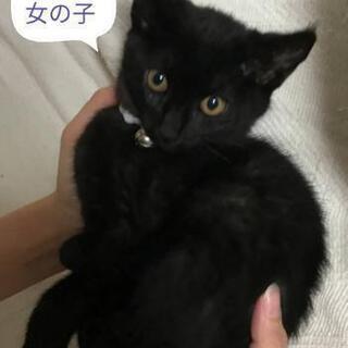 2ヵ月半の黒猫👧里親様決定しました。