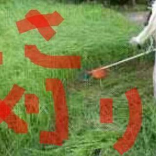草刈り庭木の剪定、ご相談下さい。