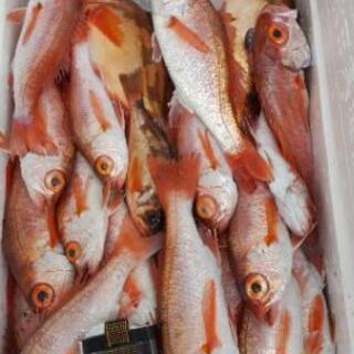 [鮮魚販売]パート・アルバイト募集!時給1000円