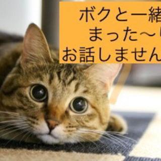 朝からゆる〜り✨お友達作り交流会♪(*´꒳`*)