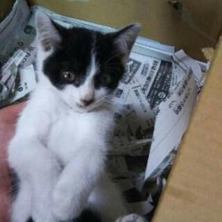◆子猫ちゃんの里親募集中◆