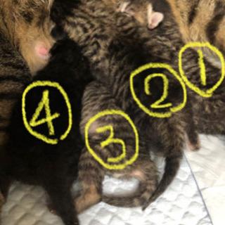 4匹の子猫が里親さんの元へ。