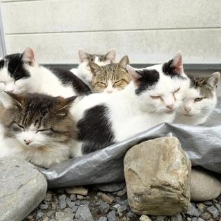 札幌 消毒 2N消毒センター 猫屋敷を清掃