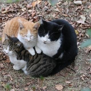 猫屋敷を清掃 札幌 2N消毒センター 事件現場特殊清掃士が在籍!