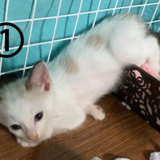 子猫4匹 新しいお家を探してます。残り1匹