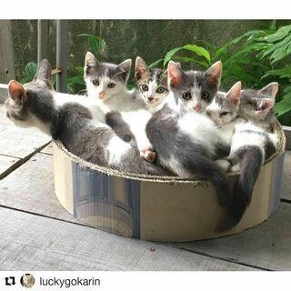 5匹の可愛い子猫(代理投稿)