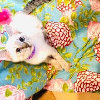 猫空シリーズ✈️魅力的なシャムMIX&カラフル茶白ちゃん❣️
