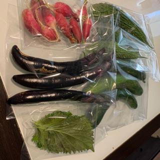 無農薬野菜 とれたて きゅうり ナス ゴーヤ 二十日大根 大葉