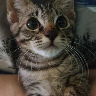 可愛い子猫約3ヶ月