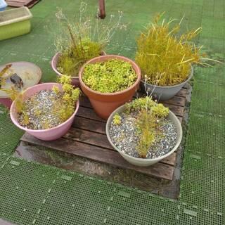 プランター5個と植木鉢