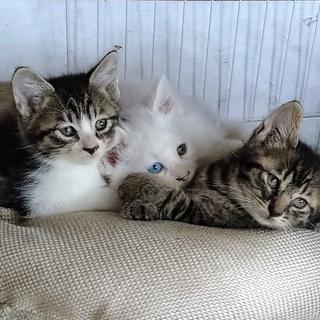 5月29日生まれ子猫2匹里親募集