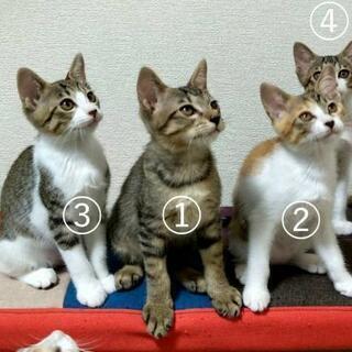 4匹とも4月22日生まれです。