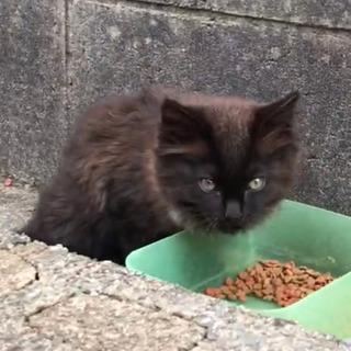 決定 フワフワ黒猫 4月生まれ