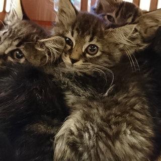 ふわふわ長毛の子猫4匹