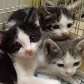 子猫たちの家族になってください!