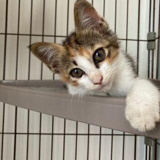 正式譲渡♥地域猫レスキュー♥らん