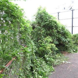 福岡、植木の徹去、格安