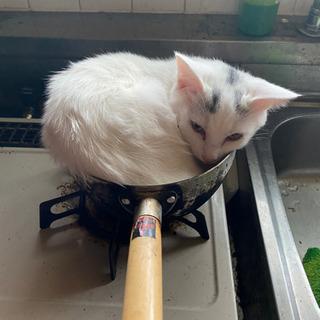 3月産まれの子猫 オス猫🐱