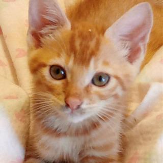 保護猫 推定3ヶ月?