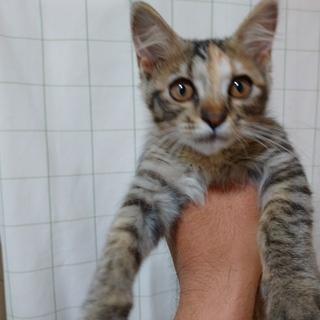 生後約2~3か月の子猫2匹の里親募集