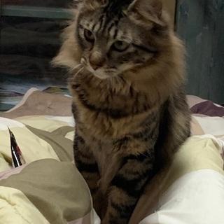 甘えん坊の1歳の猫