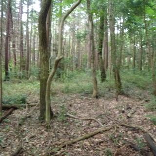 急募! 熊谷市 森林伐採 チェーンソー作業&画像送信