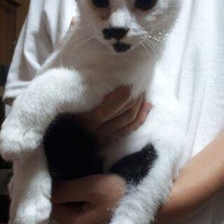 白黒猫ちゃんの里親募集