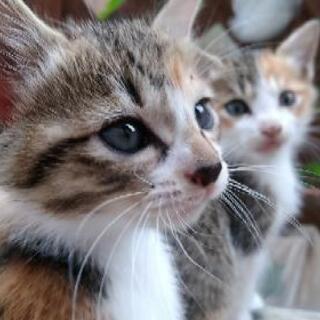 里親さん募集!! 生後2ヶ月位の仔猫達です。