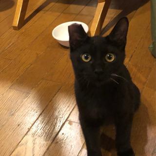 1歳くらいの男の子です! - 猫