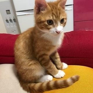 生後4ヶ月 茶トラ、オス猫