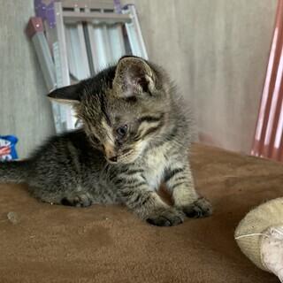 里親さん募集中 1ヶ月くらいの子猫4匹