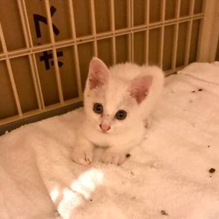 推定4月30日生まれの白猫です。