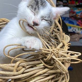 猫の里親募集してます。