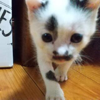 【お話中】7月4日頃生まれの子猫 (*´ェ`*)