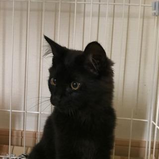 出藤さま用 4月生まれ黒猫