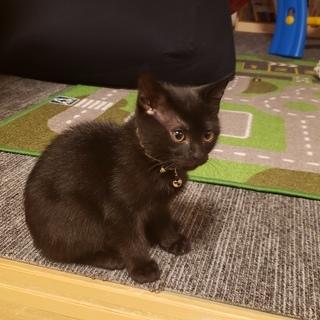 生後3か月のやんちゃな子猫です