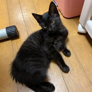 生後3ヶ月半くらいの黒猫子にゃんこ - 里親募集